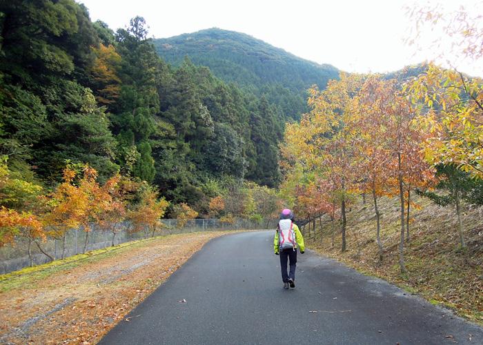 2014,11,15九千部山~蛤岳-3