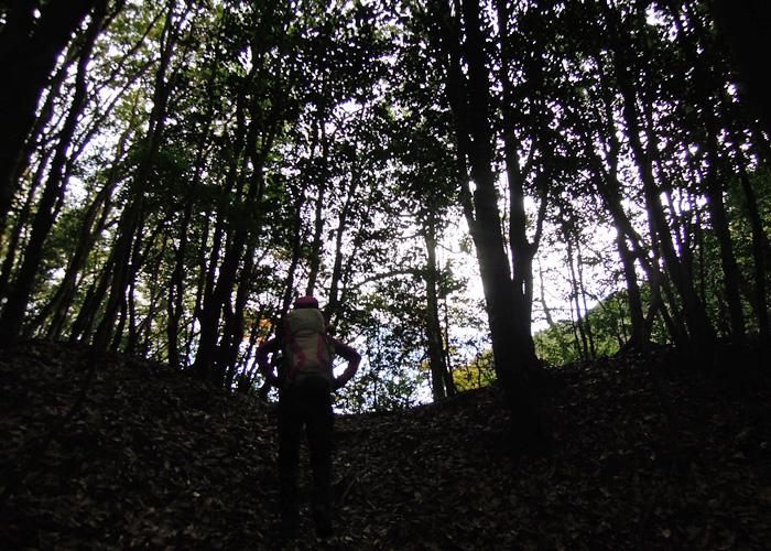 2014,11,15九千部山~蛤岳-5