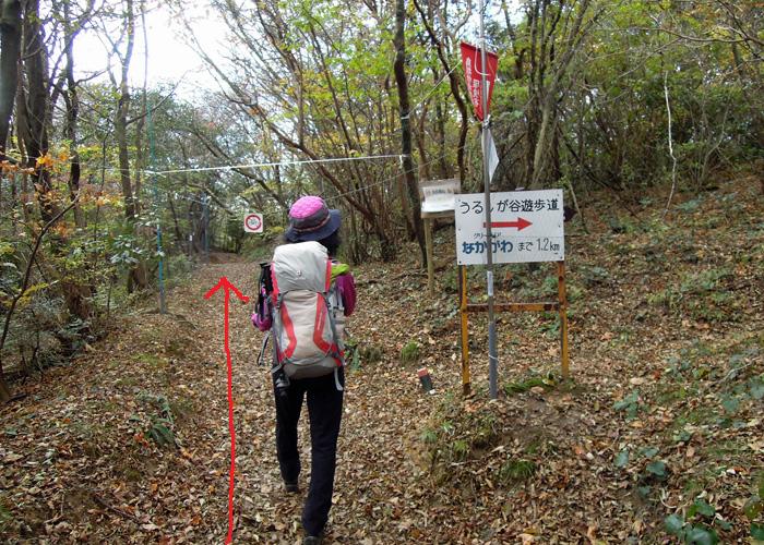 2014,11,15九千部山~蛤岳-10