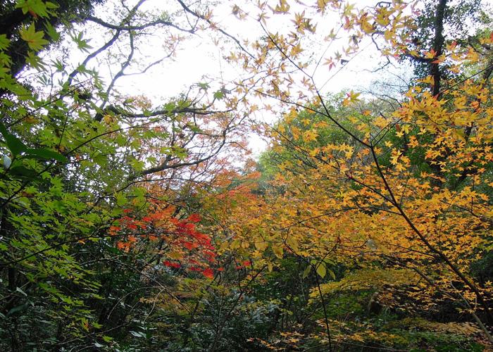 2014,11,15九千部山~蛤岳-20
