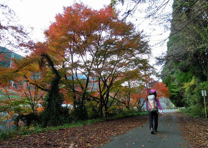 2014,11,15九千部山~蛤岳-34