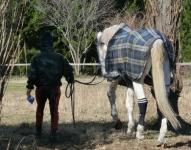 141214引退馬協会パラティン