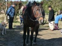 141214引退馬協会ハリマ