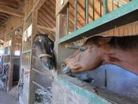 141214引退馬協会フェノマとヒシプー
