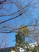 20090000_cellphone photos 284