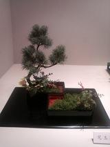20091001_ohara ryu ikebana ten 006