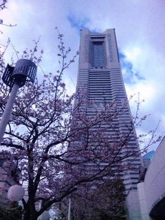 さくらとランドマークタワー1