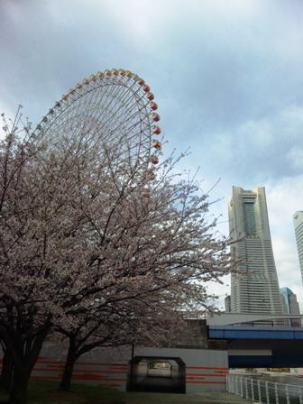 万葉の湯の桜2