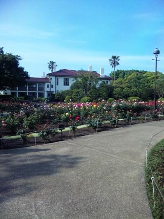 港の見える丘公園のバラ2