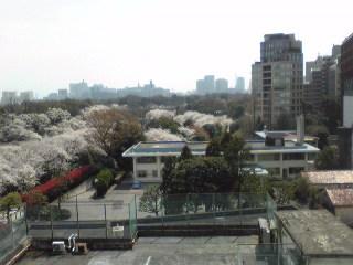 2012-4-10-九段下病院屋上1