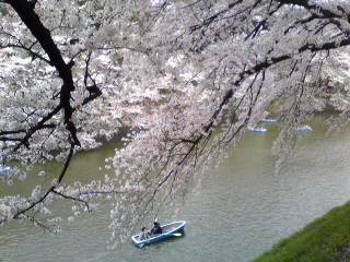 2012-4-10さくら九段下9