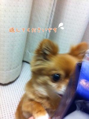 3_20130316103344.jpg