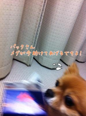 4_20130316103343.jpg