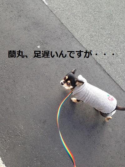 3_2013121601041913f.jpg