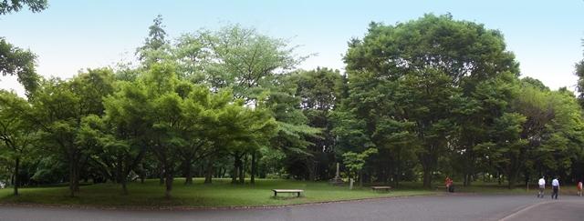640R0016514航空記念公園s パノラマ写真