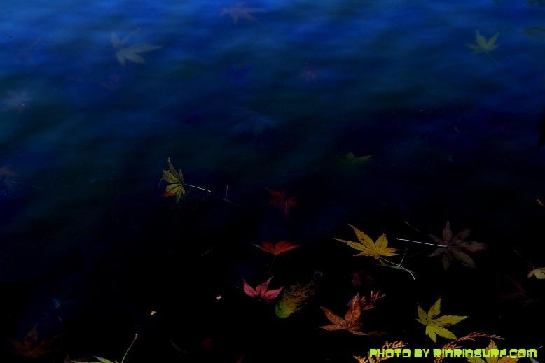 IMG_7059.jpg