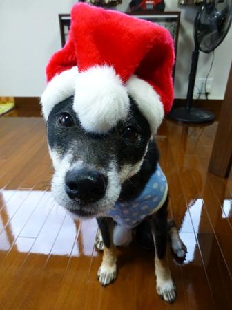 クリスマス帽子15