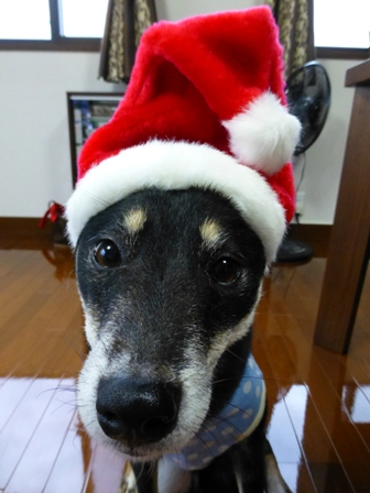 クリスマス帽子16