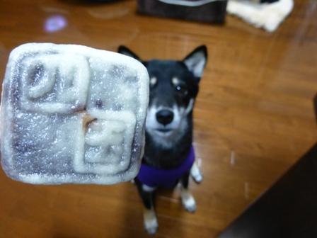 犬用讃岐うどん9