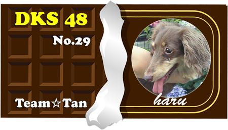 29 haru
