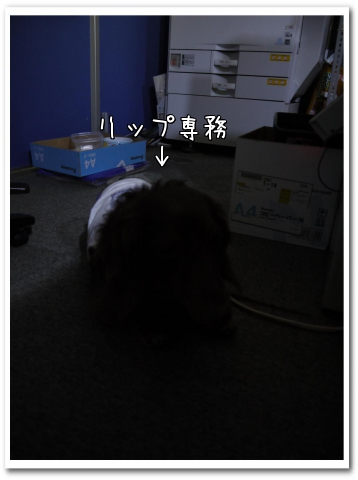 DMcc3.jpg