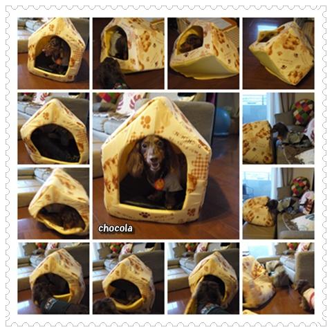 cats0711.jpg
