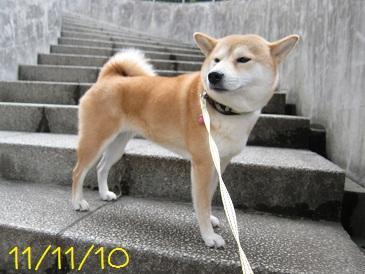 111110 1