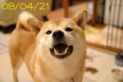 080421 1