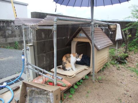 スモモ 犬小屋にて