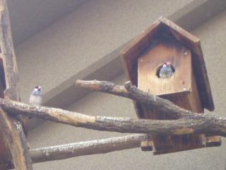 14.小鳥ちゃん