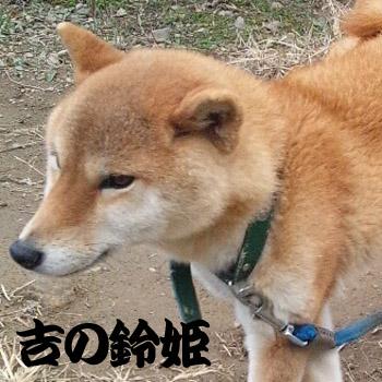 20130101suzuhime.jpg