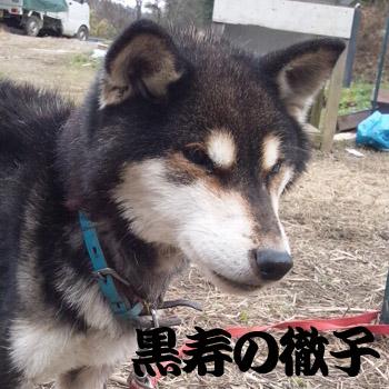 20130101tetsuko.jpg