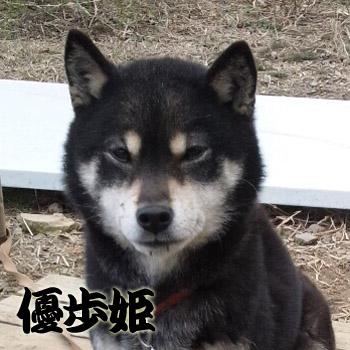 20130101yuho.jpg