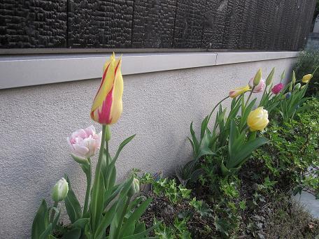 春色の風に乗って