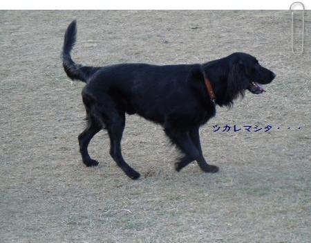 osyougatu6.jpg