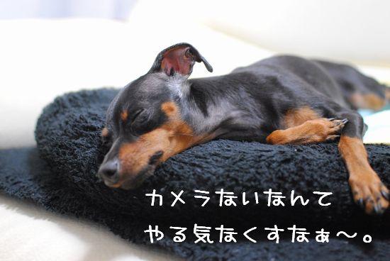 DSC_0016_20101007141346.jpg