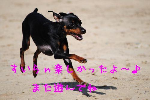 DSC_0031_20100317141705.jpg