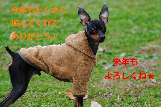 DSC_0104_20101231140012.jpg