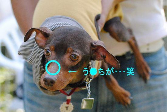 DSC_0308_20101021145000.jpg