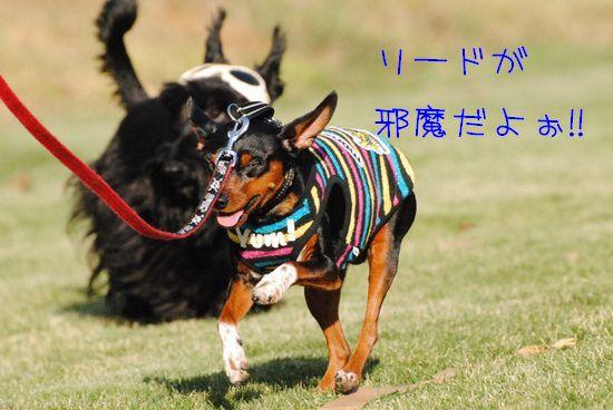 DSC_0440_20101025145537.jpg