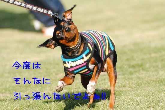 DSC_0444_20101025145537.jpg