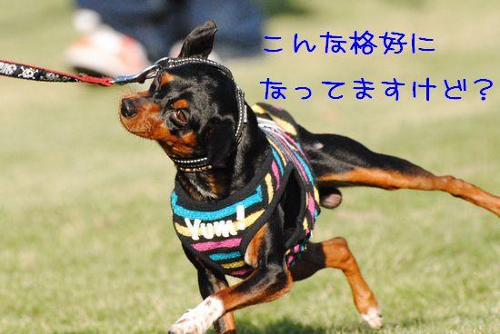 DSC_0445_20101025145536.jpg