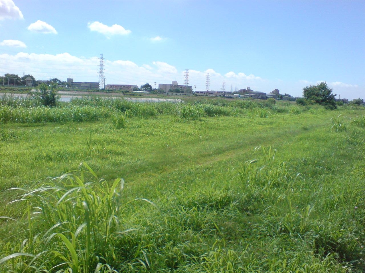 夏の武庫川