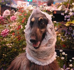 お花コーナー