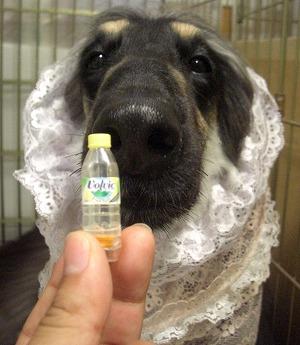 鼻の穴サイズ
