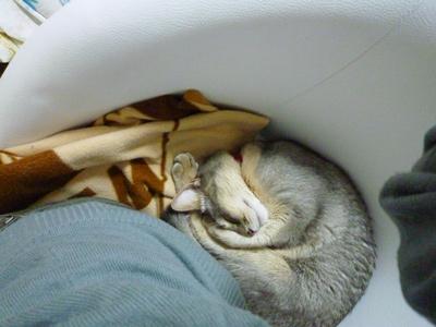 ロキの添い寝2