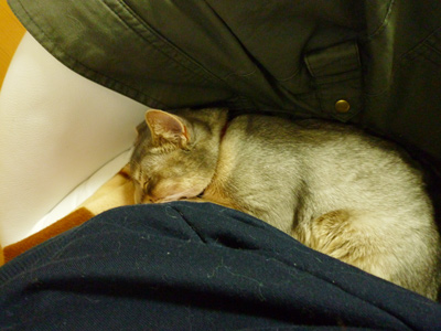 ロキの添い寝3