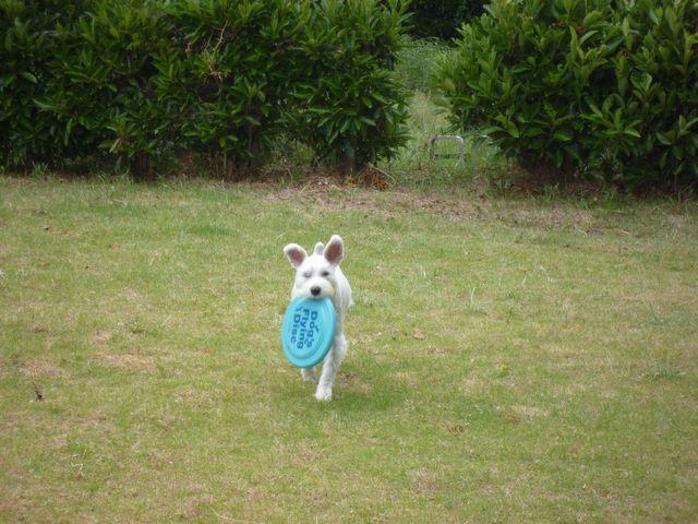 フリスビー犬「ロンくん」