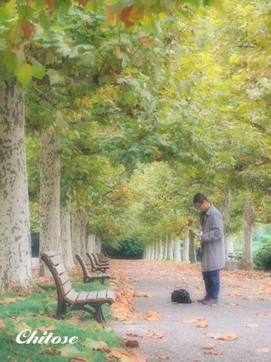 新宿御苑ポプラ並木