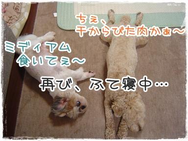 2011060317.jpg